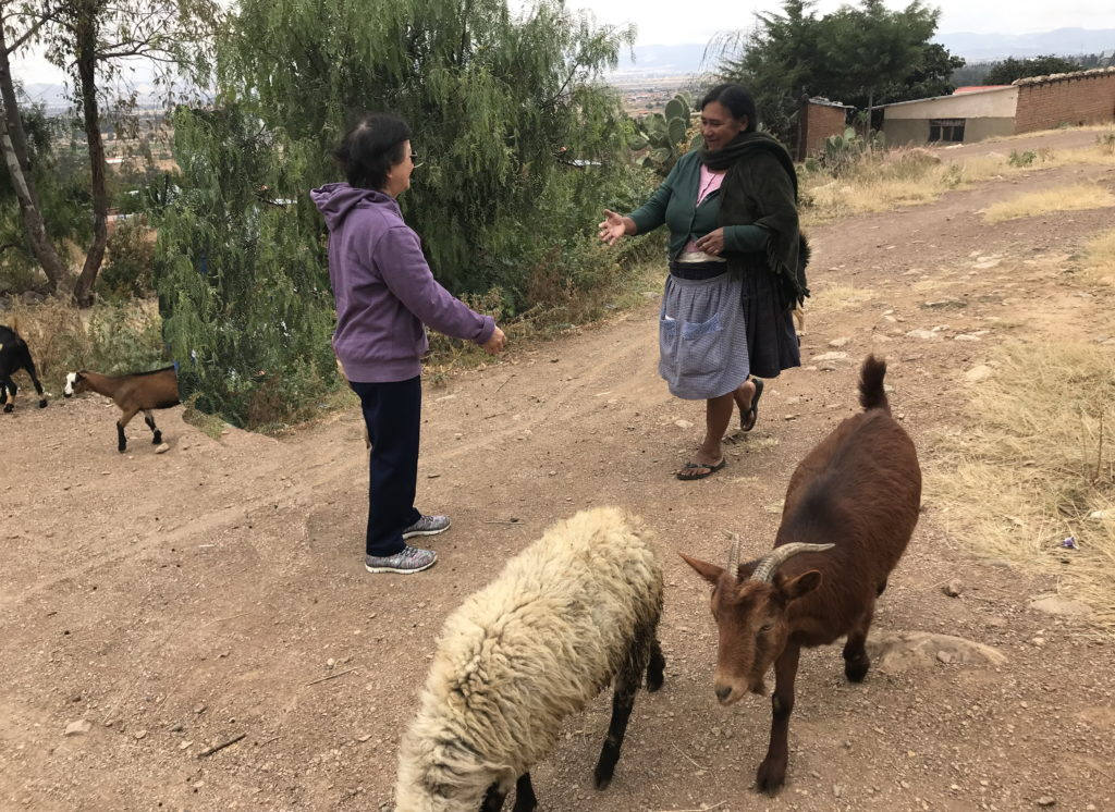 """Meeting our """"good shepherd"""" on the road"""